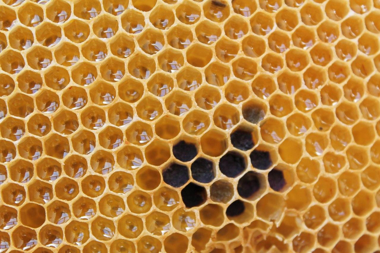 Obrigatoriedade da indicação da origem nos rótulos de mel embalado em Portugal